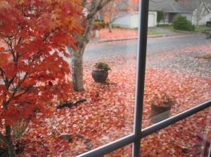 Not my friend's window, but mine a few years back!